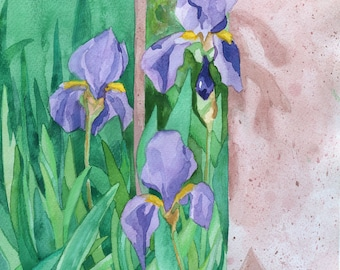 Purple Iris Print from Original Watercolor