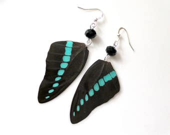 Black and Turquoise Butterfly Earrings, Real Butterfly Wings, Natural History Earrings