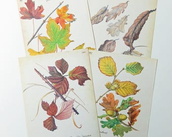 Leaves. Book Pages, The Country Diary of an Edwardian Lady,  Paper Ephemera, Journals, Scrapbooking PE236