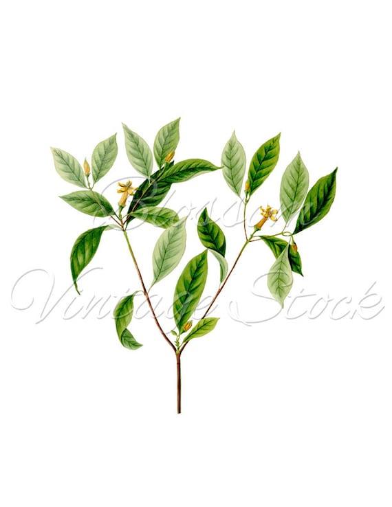 Antique Leaves Botanical Print Vintage Wall Decor PNG