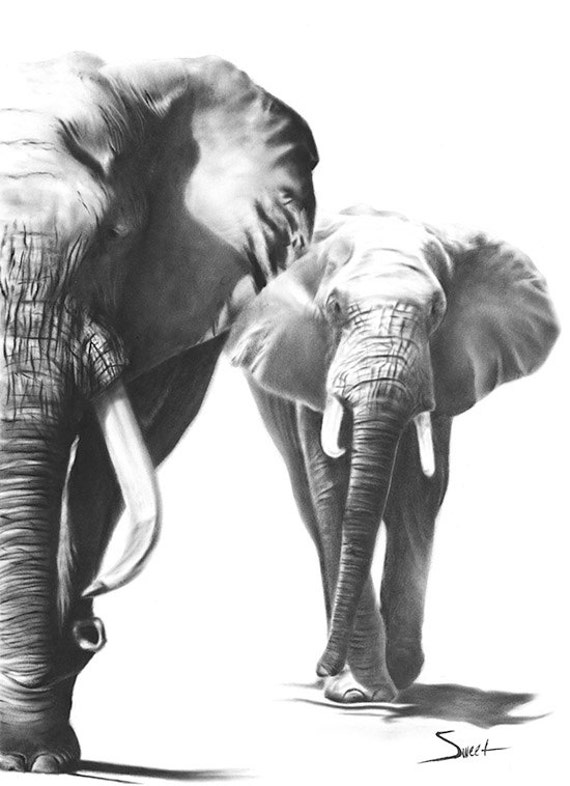 Black And White Elephant Prints