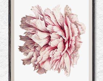 Peony print, peony clipart, vintage flower art, printable wall art, flower poster, botanical print
