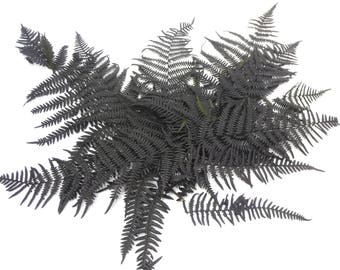 Preserved Parchemin, Flat fern, Ostrich ferns, Leaves bunch, Preserved leaves, Green leaf, Preserved leaf for craft, Bouquet of leaves
