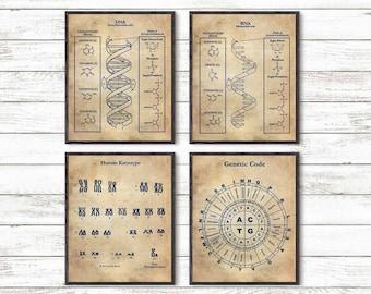 DNA Print Art, Science Art, Human DNA, Set of 4 prints, Biology Print, Science Art Print, Wall Art Poster, Human Keryotype, Genetic Code