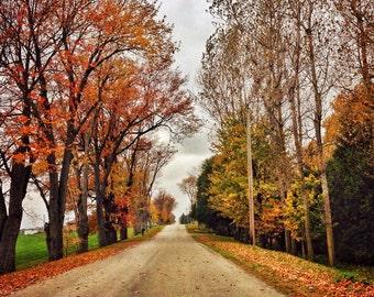 autumn road, tree photo, nature photograph, thanksgiving decor landscape fallen leaves country road golden yellow orange, Ontario home decor