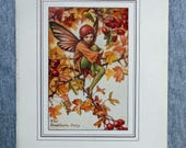 Hawthorn Flower Fairy Vin...