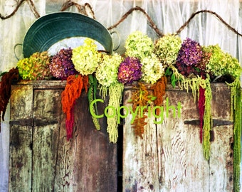 Hydrangeas on Antique Pie Safe, floral wall art, autumn colors, home wall decor, fine art photography, home decor, rustic, Gina Waltersdorff
