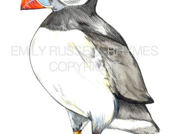 Puffin - Signed A4 Wildlife Print