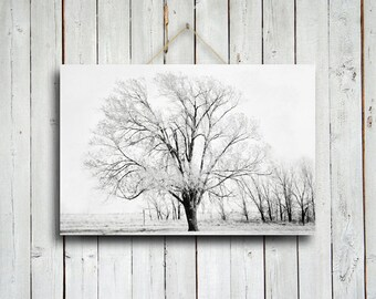 Black and White Tree - Black and White Tree photo - Tree photograph - Lone Tree - Tree photography - Black and White Decor