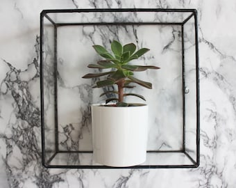 Pappus Square Glass Wall Display Shelf
