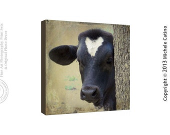Peeking Cow Photo Canvas,  Hiding Cow photo, Baby Calf Longhorn Art, Cute Cow Photo on Canvas Square Farm Animal Barnyard Boys Room Print