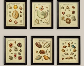 Set Of 6 Sea Shells Prints Gallery Wall Natural History 8x10