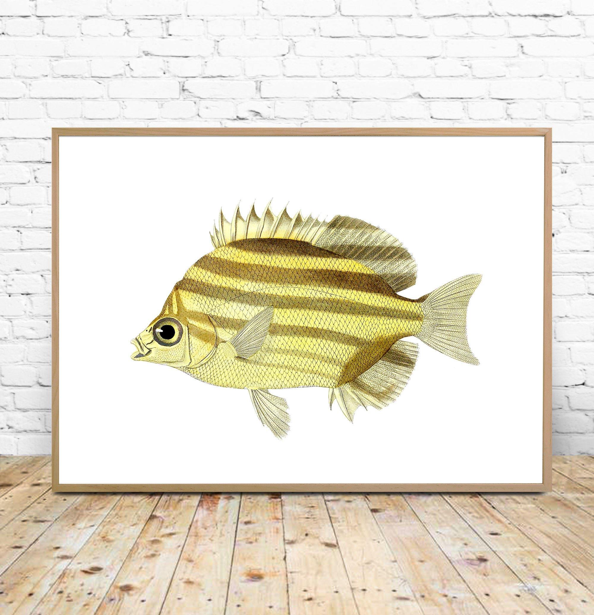 Fish Art Print Fish Printable Fish Wall art red fish