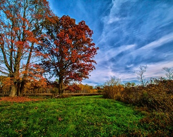 Fall, Trees, Sky, Clouds, Grass, Landscape, Cambridge Springs, PA, Pennsylvania, Orange, Blue, Green