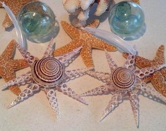 Beach Decor Star Shell Christmas Ornament - Nautical Decor Seashell Holiday Ornament