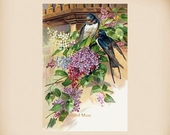 Swallows With Lilac New 4x6 Vintage Postcard Image Photo Print FN24