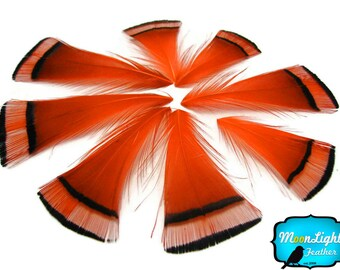 Pheasant Feathers, 1 DOZEN - ORANGE Golden Pheasant Tippet Feather : 462