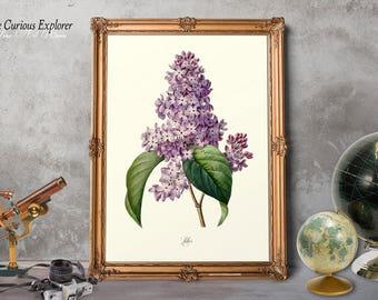 Botany Print, Floral Illustration, Lilac Bloom Print, Cottage Lilac Print, Lilac Print, Lilac Art Print, Lilac Dorm Decor - E11_18