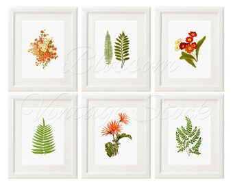 Wall Art Prints, Botanical Print Set, Botanical Set of 6, Set of 6 Prints, Ferns, Leaves, Flowers, Fern, Nature, Downloadable Prints - 2422