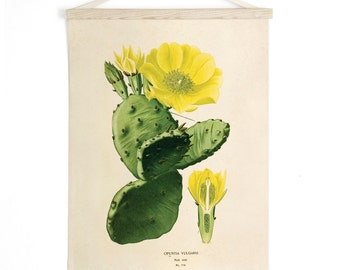 Pull Down Chart - Prickly Pear Cactus Vintage Botanical Reproduction Print. Educational Diagram Botany Succulent Poster - CP226CV