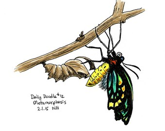 No.12 Metamorphosis / Original Artwork / Illustration / Daily Doodle / Art Print / Butterfly Drawing