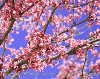 Blossoms 8x10 Glossy Print