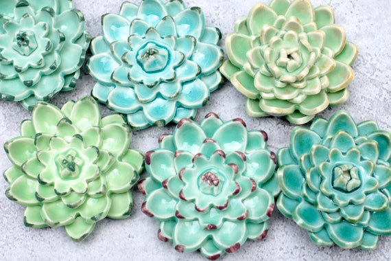 Wall succulent, choose your favorite