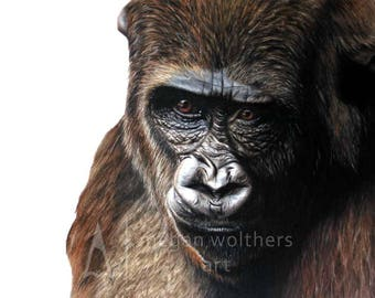 Primal - Gorilla Drawing Print by Megan Wolthers