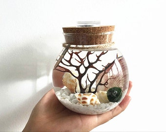 Marimo aquarium kit with glass jar/moss ball/white stones/sea fan/seashells - underwater living environment that will brighten any room