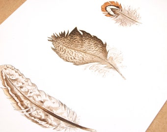 Duck Feathers Original Watercolour Painting of, 8 x 10