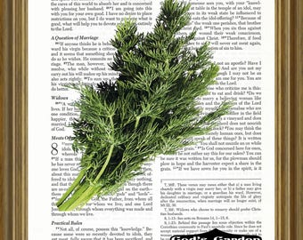 Dill printed on Bible Page