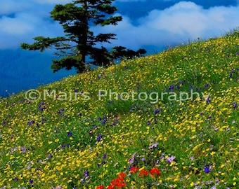 Mountain Top, High Meadow Fog Oregon Coast Range Wildflowers Summer Landscape, Fine Art Photography signed matted 8 x 12 original photograph