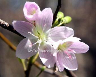 Pink spring flower 11X14 fine art Photograph