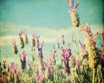 "Lavender flowers print - botanical photograph -  french country - farmhouse kitchen - lavender field - purple wall art ""Stoechas"""