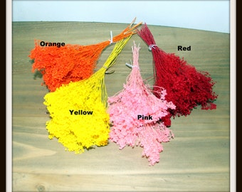 Broom Bloom-Gyp- Buy 1 get 1 FREE-Red-yellow-pink-Bleached or orange-wedding fillers-dried floral-Brooms bloom-About .6 oz bunch
