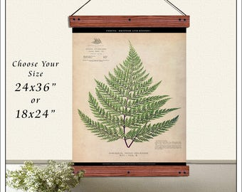 Hanging Fern Print. Antique Pull Down Chart. Vintage School Chart. 24x36 Hanging Charts, Fern 3