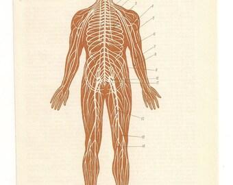 2 Vintage Anatomical Prints brain skeleton blood Medical Diagrams illustrations Anatomy Print  Paper Ephemera Old Victorian