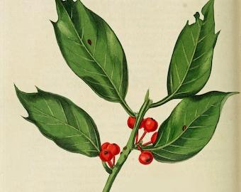 Christmas Vintage Print Digital Printable Holly Antique