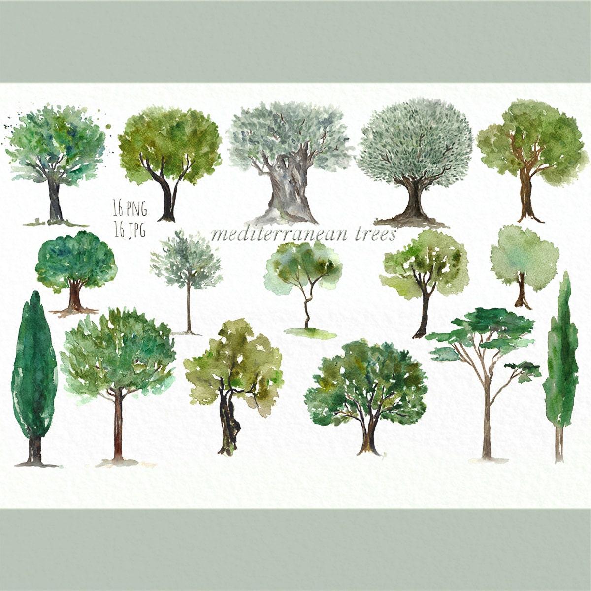 Mediterranean TREES. Watercolor clip art. Digital Watercolours ...