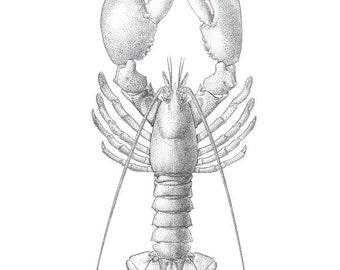 Cohasset Lobster Print in Black and White - Beach Decor Nautical Decor Ocean Wall Decor Cohasset Print Sandy Beach Massachusetts Ocean Decor
