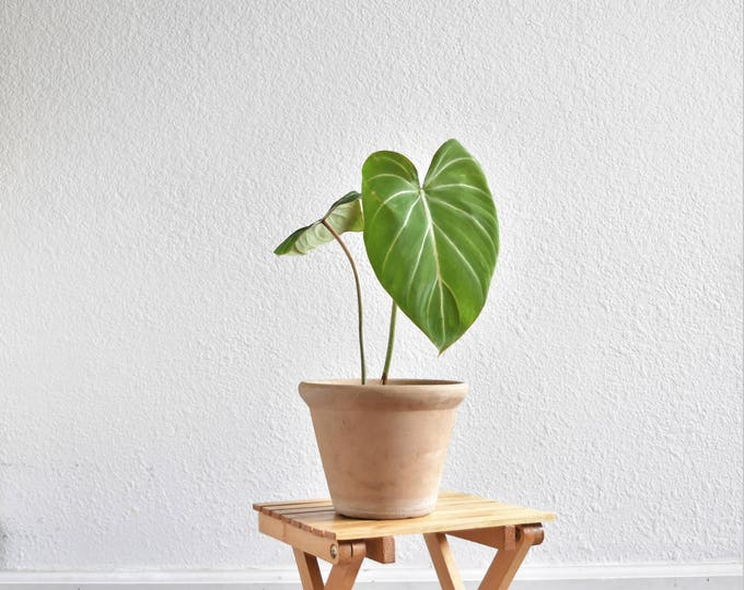 small wooden collapsable slat wood folding stool / plant stand