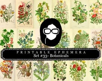 Botanical Print Set Ephemera Pack - Printable Ephemera Set #33 - 13 Page Instant Download, journaling kit, journal cards, journal pages