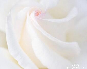 Rose Photo Print - flower photography, spring, romantic, rose art print, minimalist, monochromatic, wall art, wedding gift, nursery wall art