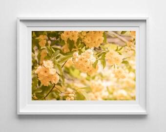 Nature Photography, Yellow Flowers, Original Print, Landscape, Botanical Wall Art, Decor