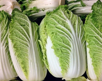 Napa Michihili Chinese Cabbage Seeds Non-GMO Naturally Grown Open Pollinated Heirloom Gardening