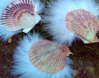 Large Seashell Hair Clips
