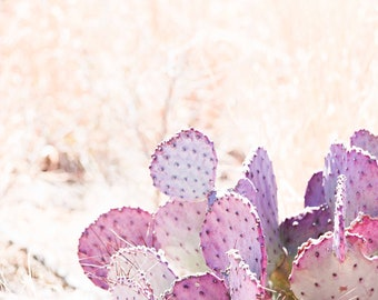 Pastel Prickly Fine Art Photography Purple Lavender Pink Cactus Texas Rustic Home decor Feminine home decor Ranch House Chic Farmhouse art
