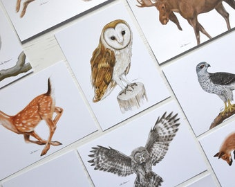 Woodland Animals - Postcard Sets - Nature Cards - Woodland Wedding - Postcard Set - Place Cards