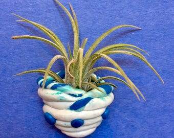 Magnetic air plant holder