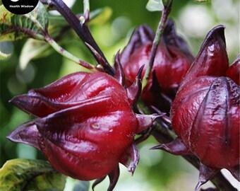 Buy Herb Hibiscus Sabdariffa Seeds Plant Roselle Flower For Mei Gui Jia